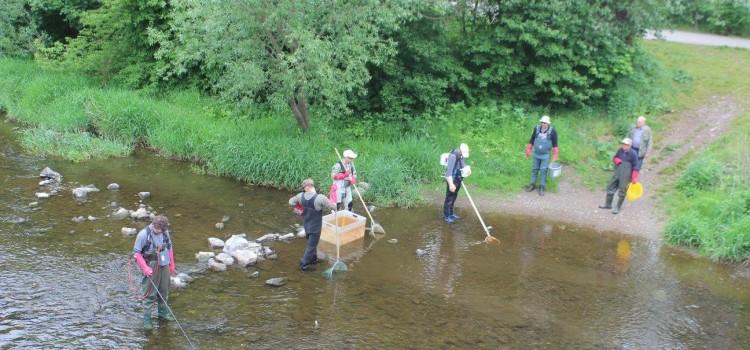 Untersuchungen zur Auswirkung des Kormorans auf den Fischbestand ausgewählter Thüringer Gewässer