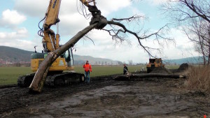 Baum in Vorbereitung