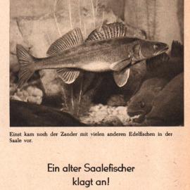 1958: Ein alter Saalefischer klagt an!