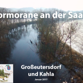 Kormorane an der Saale Tag 1 (Video)