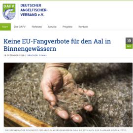 Keine EU-Fangverbote für den Aal in Binnengewässern