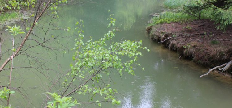Die Bedeutung von Waldgewässern