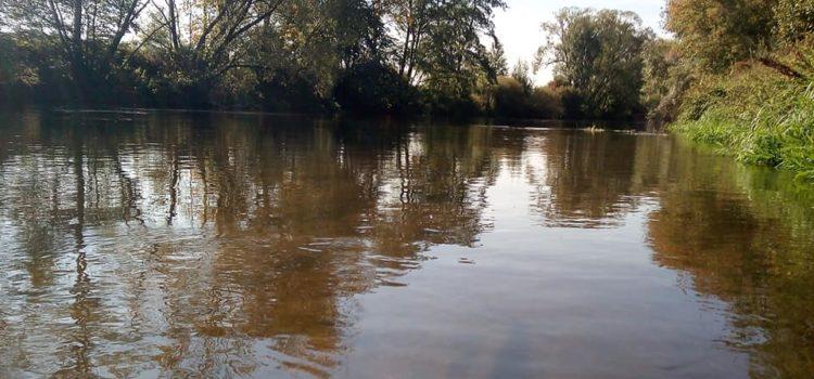 Neue Ausführungsverordnung zum Thüringer Fischereigesetz: Aalschonzeit!