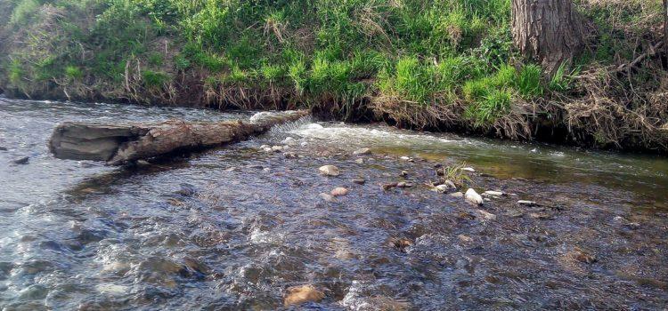 Begradigte Flussabschnitte verändern