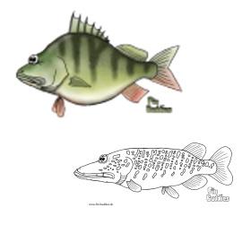 Kostenlose Ausmalbilder mit Fisch-Motiven
