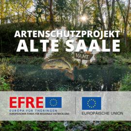 """VANT startet  EFRE – Artenschutzprojekt """"Alte Saale"""""""